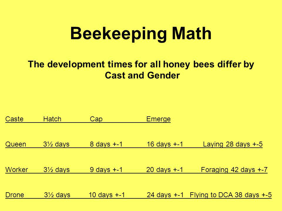 The development times for all honey bees differ by