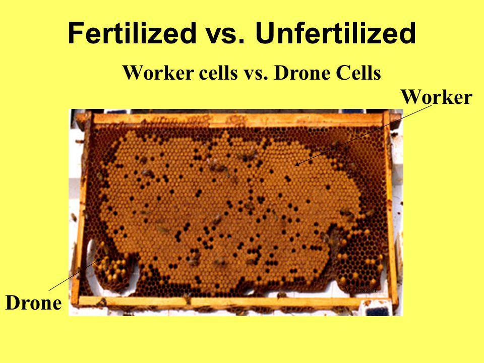 Fertilized vs. Unfertilized
