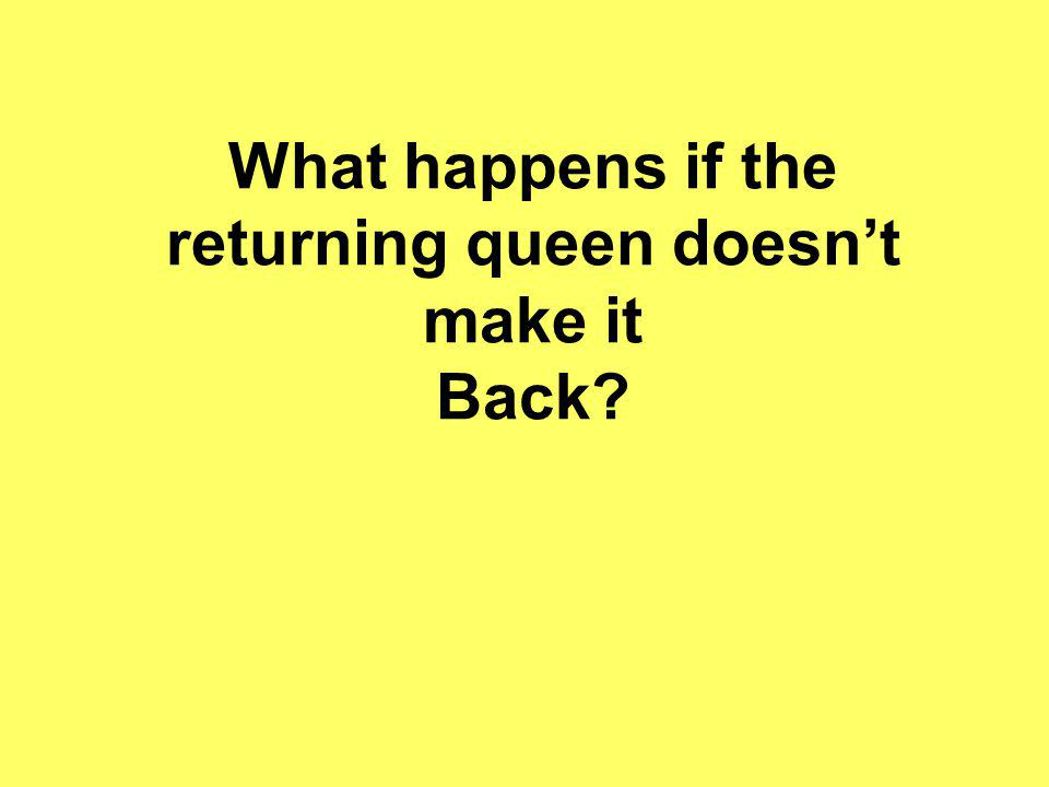 What happens if the returning queen doesn't make it Back