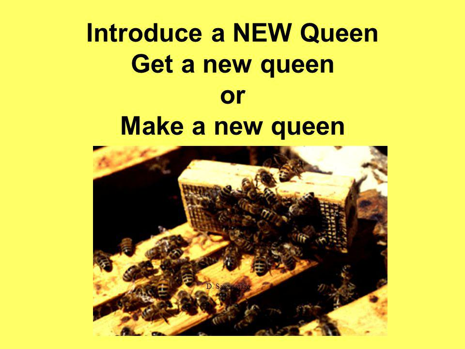 Introduce a NEW Queen Get a new queen or Make a new queen