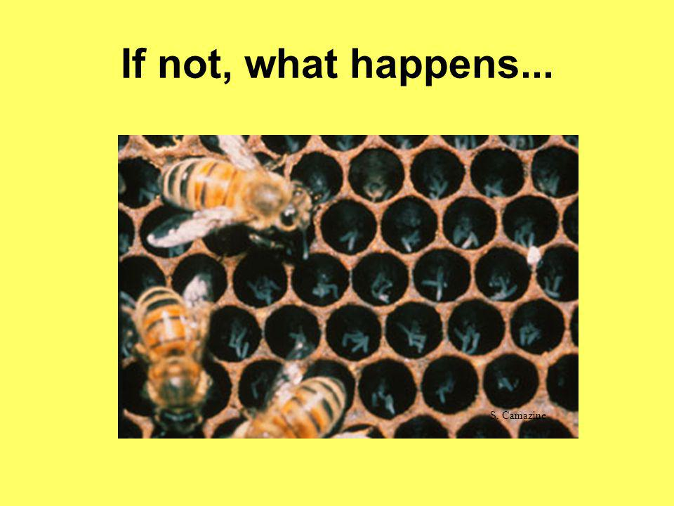 If not, what happens... S. Camazine