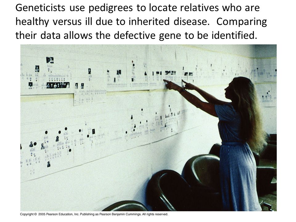 Geneticists use pedigrees to locate relatives who are healthy versus ill due to inherited disease.