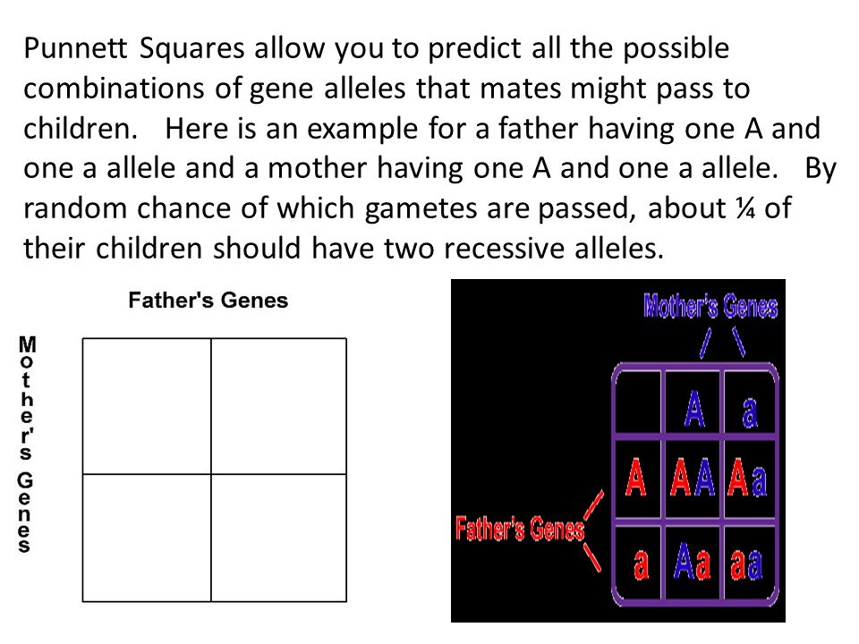 Punnett Squares allow you to predict all the possible combinations of gene alleles that mates might pass to children.