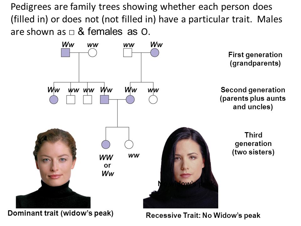 Recessive Trait: No Widow's peak