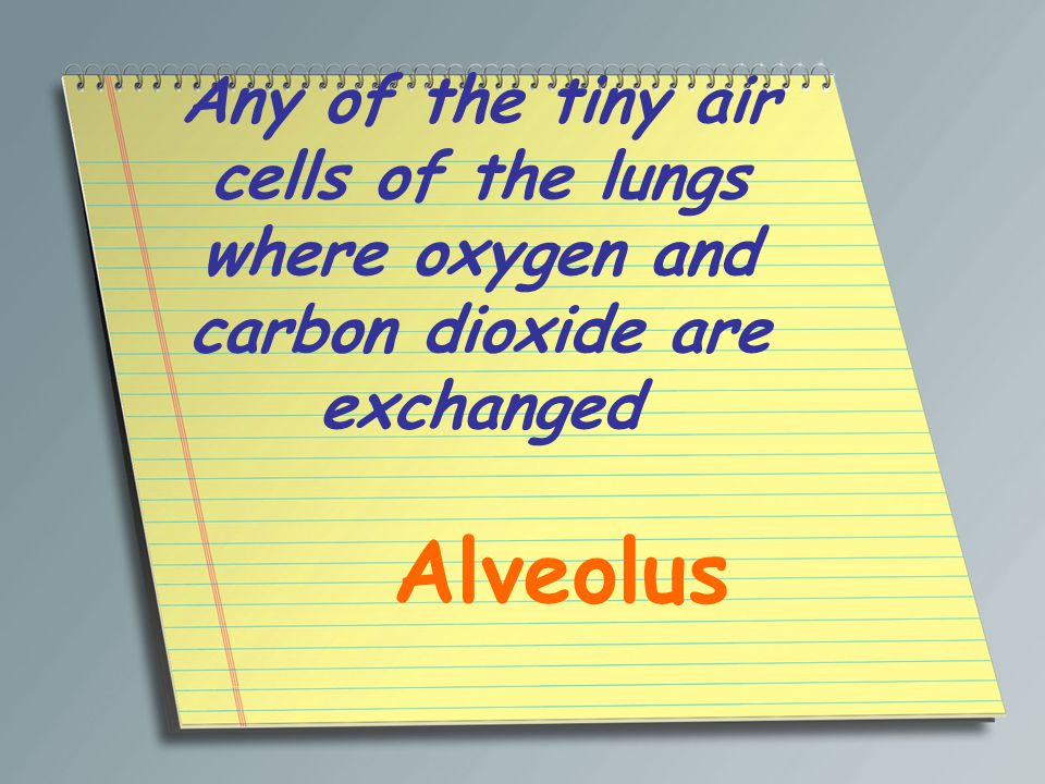 Any of the tiny air cells of the lungs where oxygen and carbon dioxide are exchanged