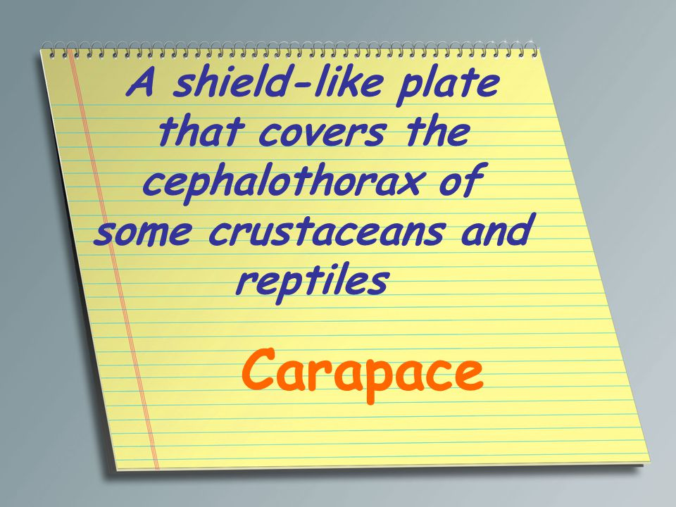 A shield-like plate that covers the cephalothorax of some crustaceans and reptiles