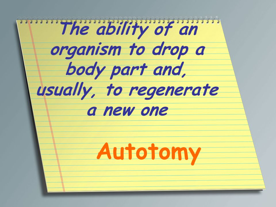The ability of an organism to drop a body part and, usually, to regenerate a new one