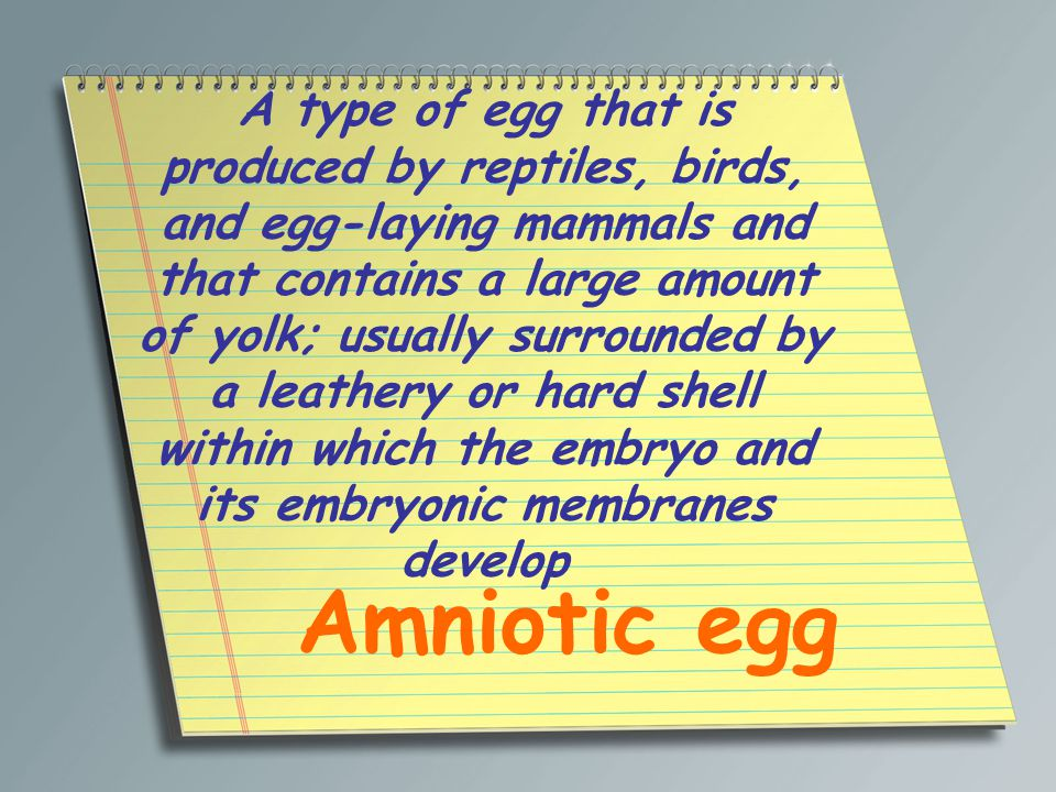 A type of egg that is produced by reptiles, birds, and egg-laying mammals and that contains a large amount of yolk; usually surrounded by a leathery or hard shell within which the embryo and its embryonic membranes develop