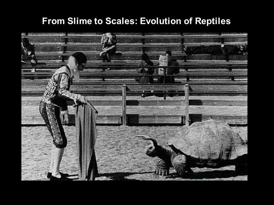 From Slime to Scales: Evolution of Reptiles