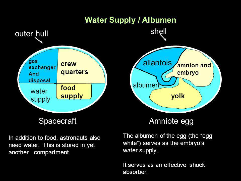 Water Supply / Albumen shell outer hull allantois Spacecraft