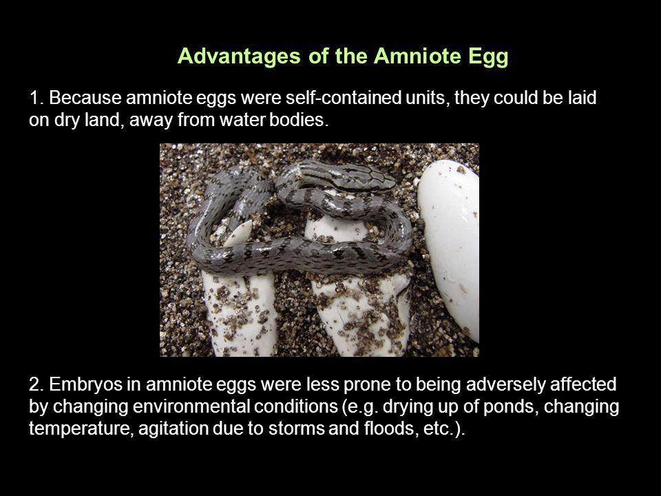 Advantages of the Amniote Egg