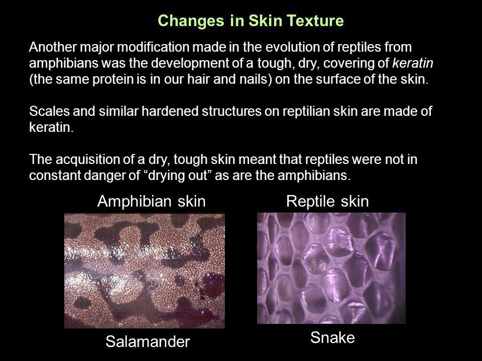 Changes in Skin Texture