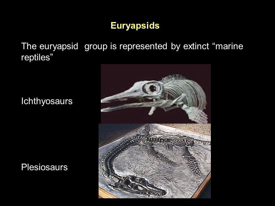 Euryapsids The euryapsid group is represented by extinct marine reptiles Ichthyosaurs.