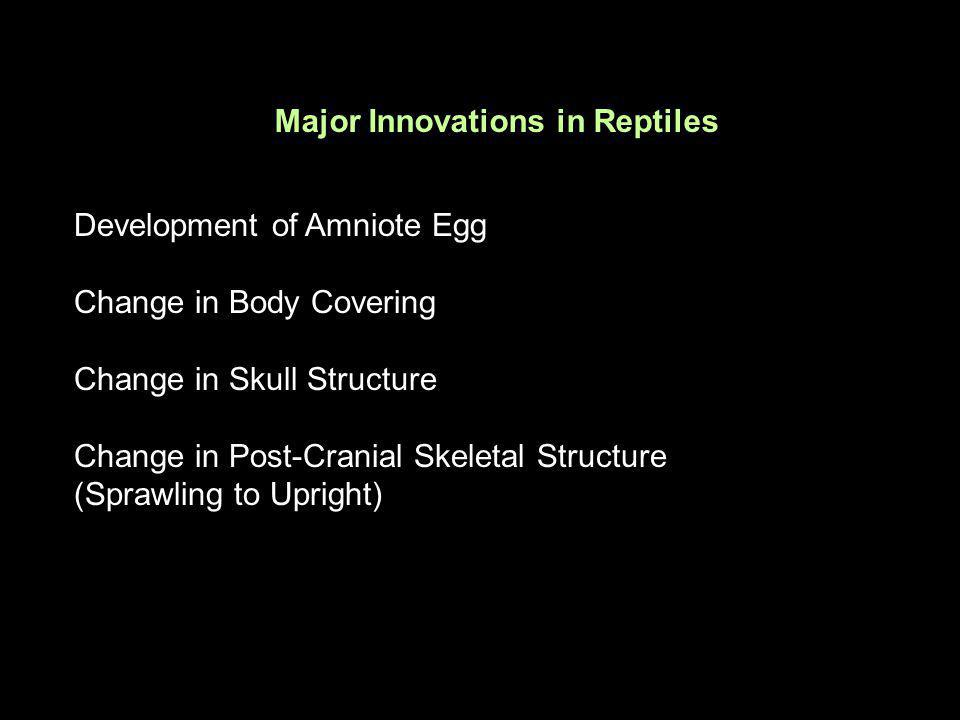 Major Innovations in Reptiles