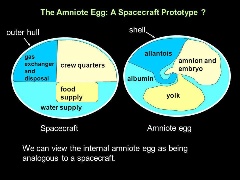 The Amniote Egg: A Spacecraft Prototype