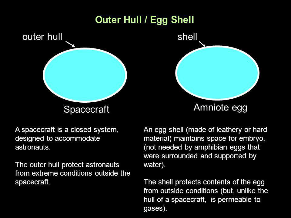 Outer Hull / Egg Shell outer hull shell Amniote egg Spacecraft