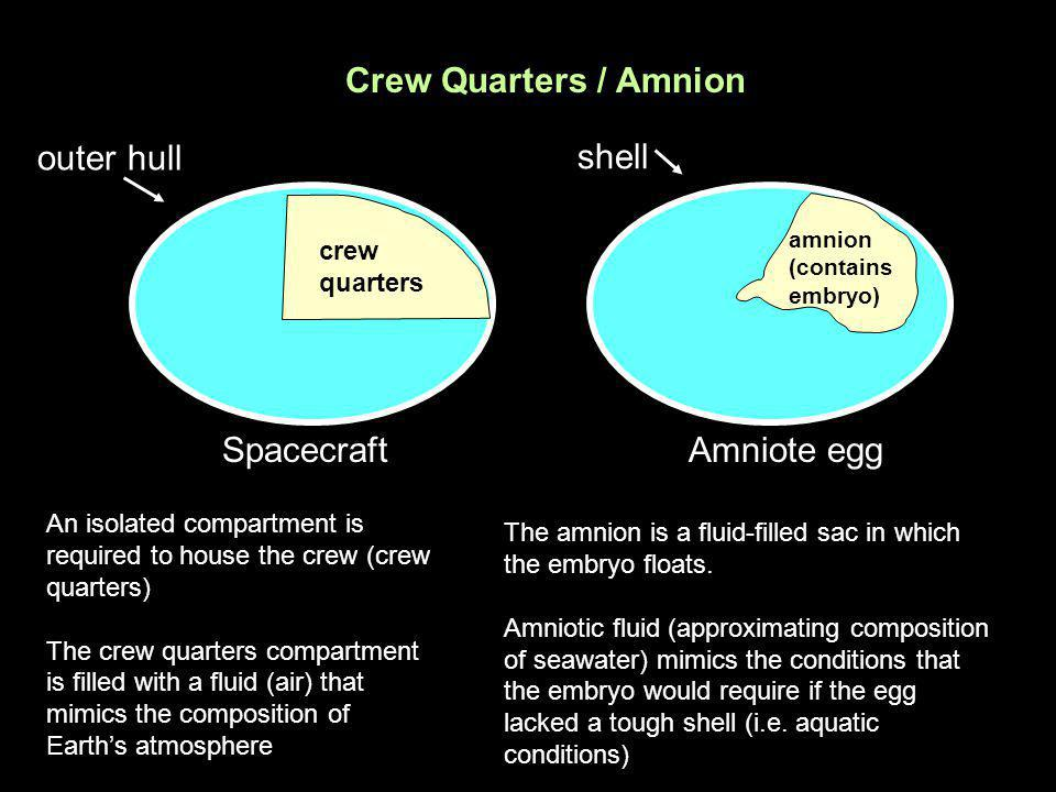 Crew Quarters / Amnion outer hull shell Spacecraft Amniote egg crew