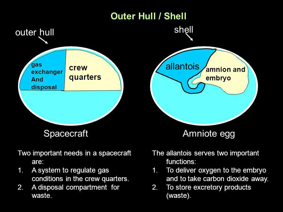Outer Hull / Shell shell outer hull allantois Spacecraft Amniote egg