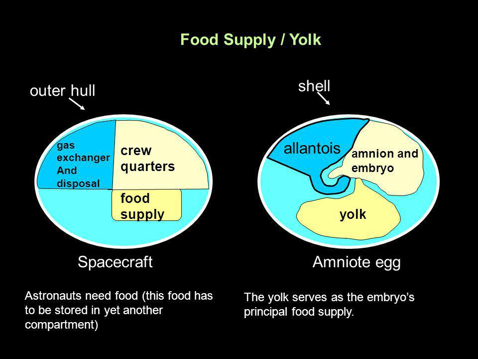 Food Supply / Yolk shell outer hull allantois Spacecraft Amniote egg