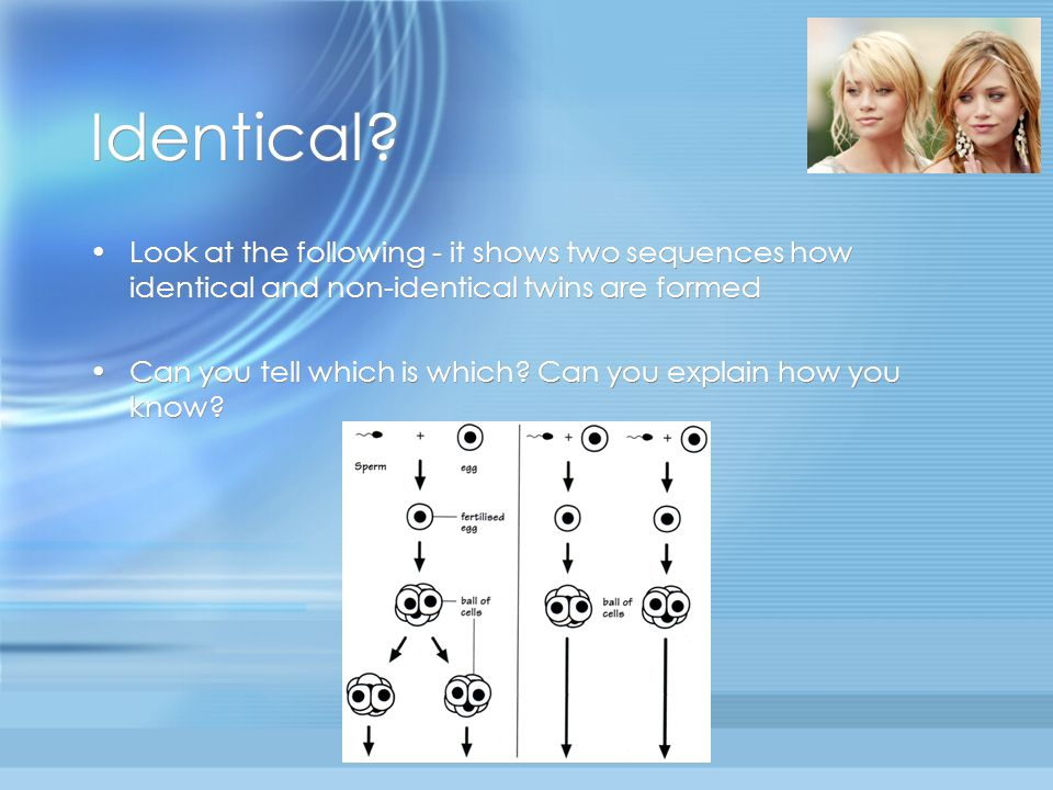 Identical Look at the following - it shows two sequences how identical and non-identical twins are formed.