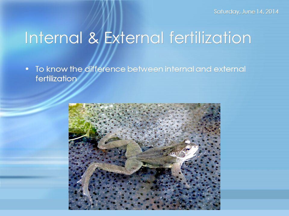 Internal & External fertilization