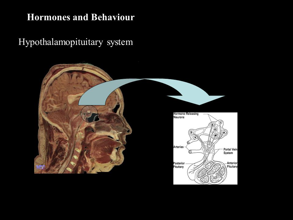 Hormones and Behaviour