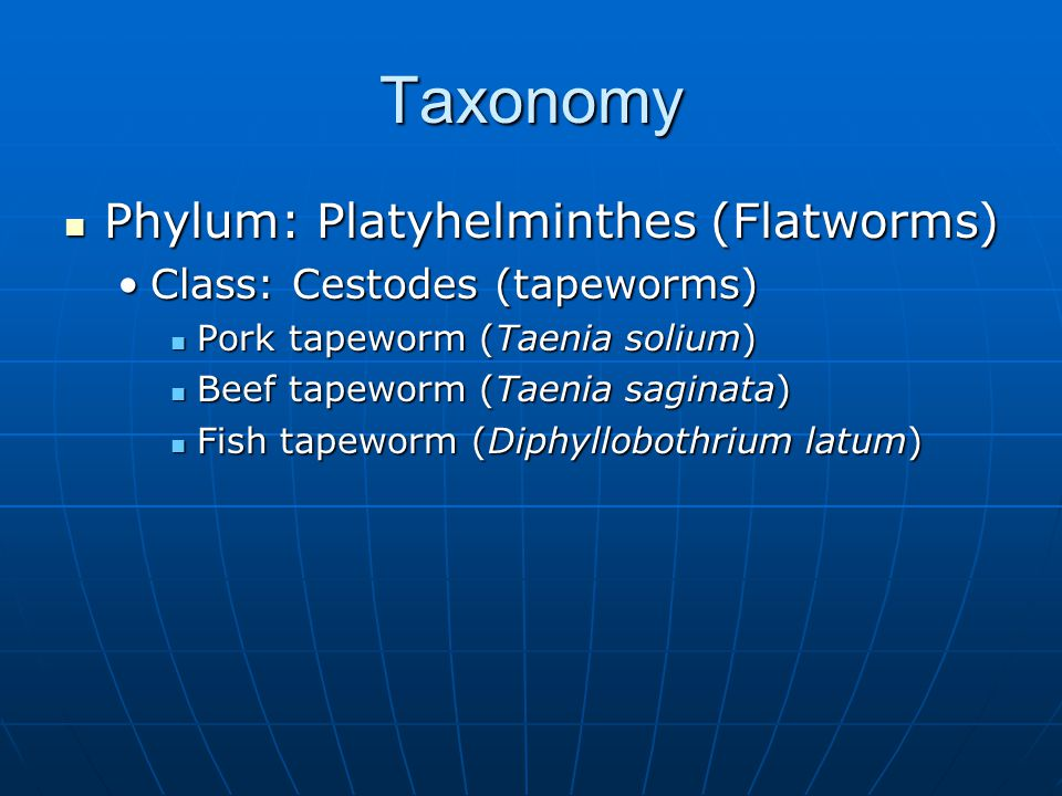 Taxonomy Phylum: Platyhelminthes (Flatworms)