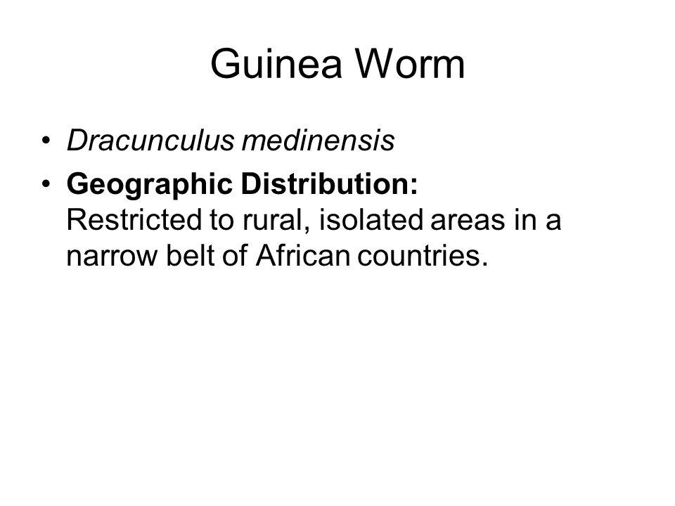 Guinea Worm Dracunculus medinensis