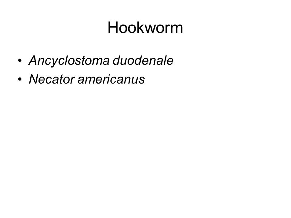 Hookworm Ancyclostoma duodenale Necator americanus