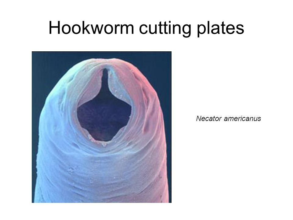 Hookworm cutting plates