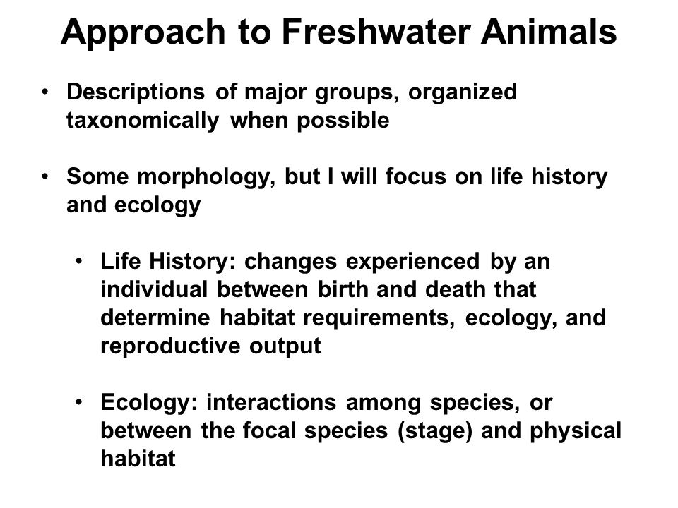Approach to Freshwater Animals