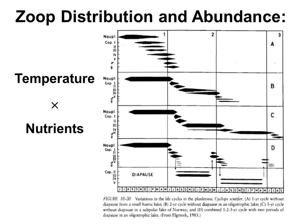 Zoop Distribution and Abundance: