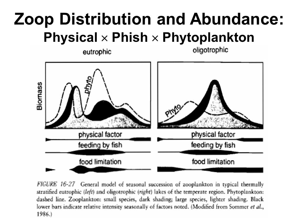 Zoop Distribution and Abundance: Physical  Phish  Phytoplankton