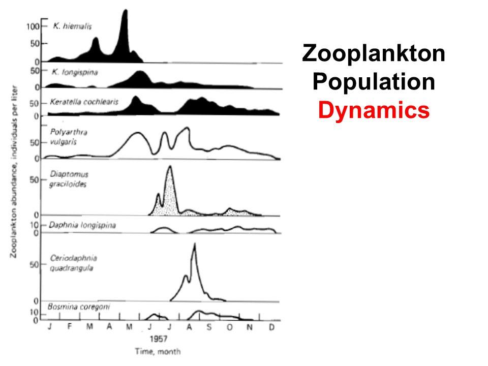 Zooplankton Population Dynamics