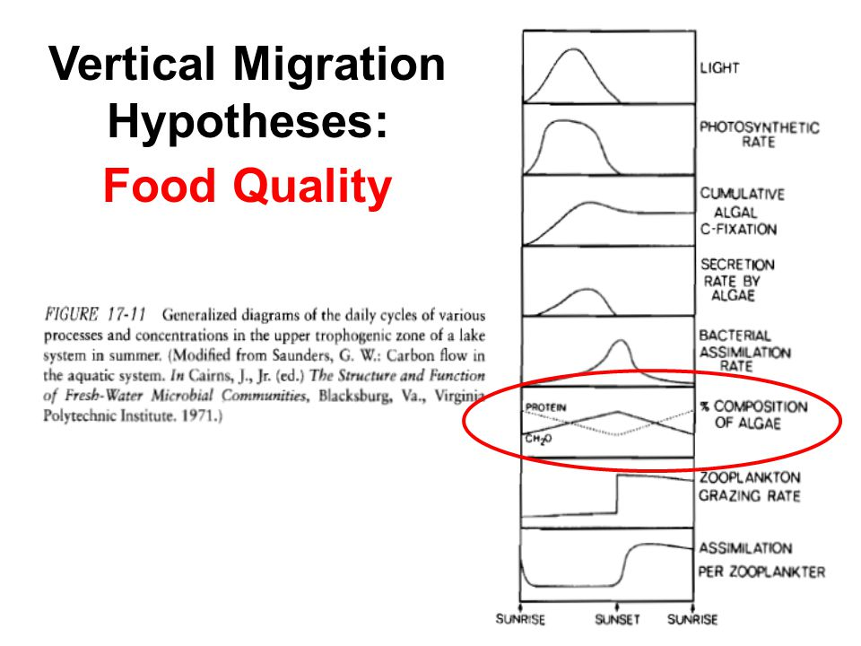 Vertical Migration Hypotheses: