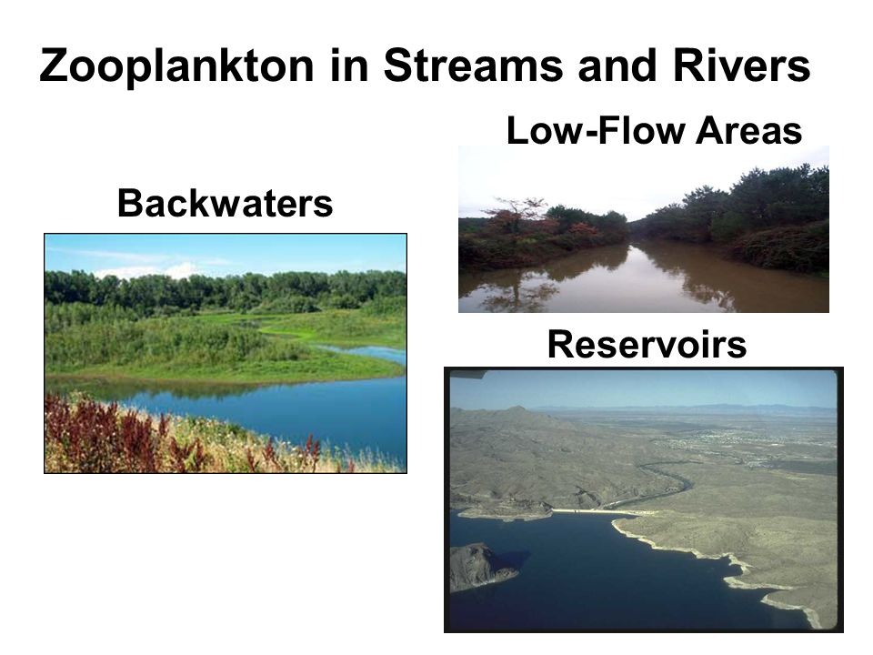 Zooplankton in Streams and Rivers