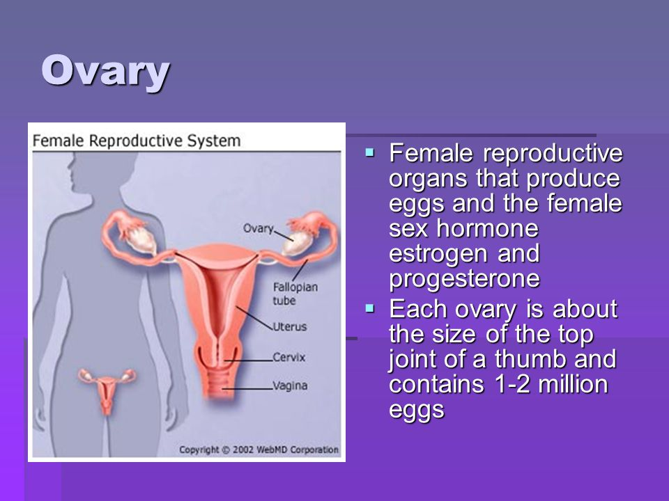 Ovary Female reproductive organs that produce eggs and the female sex hormone estrogen and progesterone.