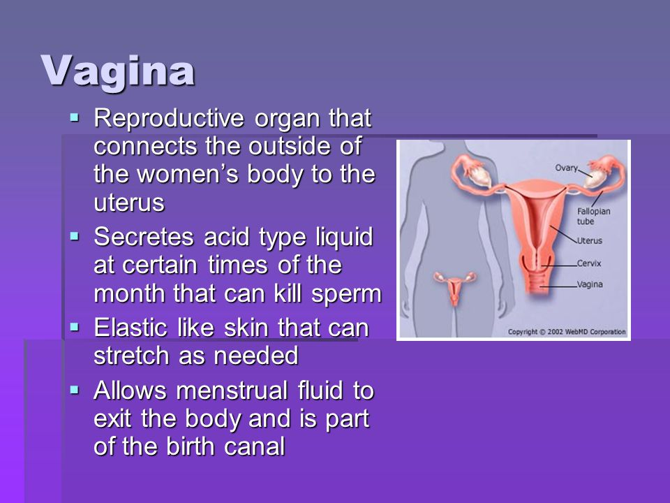 Vagina Reproductive organ that connects the outside of the women's body to the uterus.