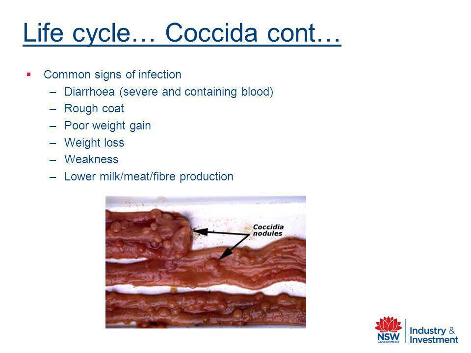 Life cycle… Coccida cont…