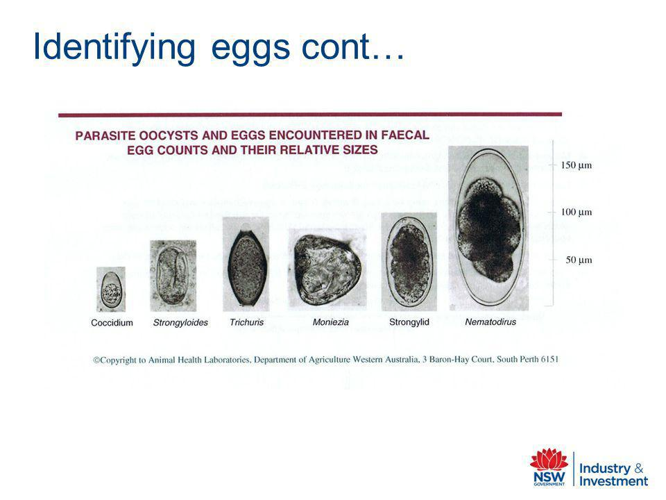 Identifying eggs cont…