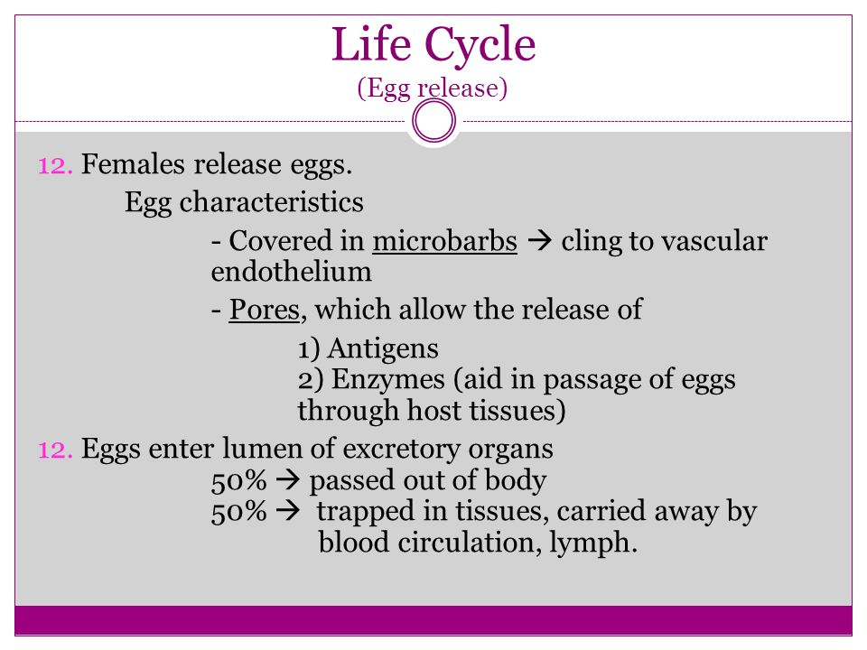 Life Cycle (Egg release)