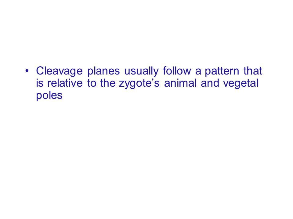 Cleavage planes usually follow a pattern that is relative to the zygote's animal and vegetal poles
