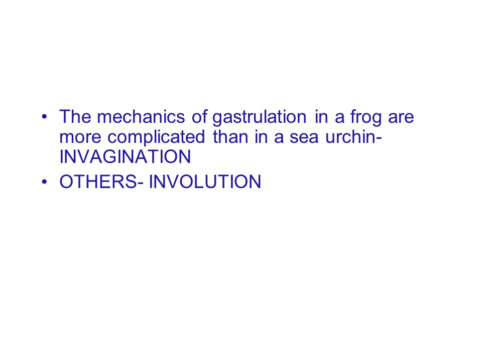 The mechanics of gastrulation in a frog are more complicated than in a sea urchin-INVAGINATION