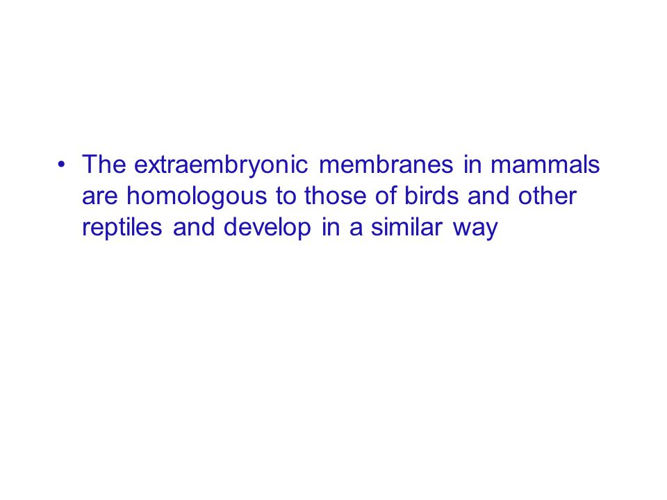 The extraembryonic membranes in mammals are homologous to those of birds and other reptiles and develop in a similar way