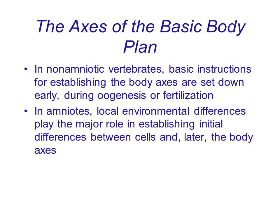 The Axes of the Basic Body Plan