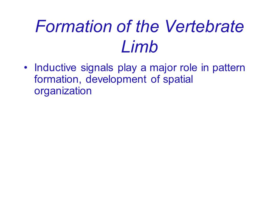 Formation of the Vertebrate Limb
