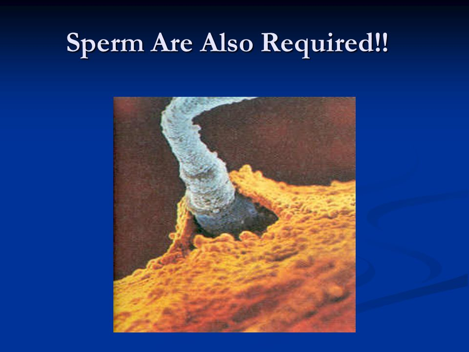 Sperm Are Also Required!!