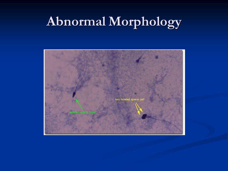 Abnormal Morphology