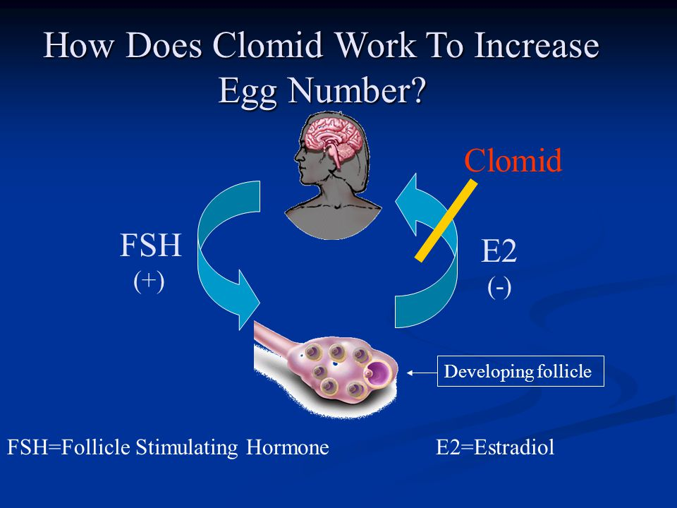 Does clomid increase eggs