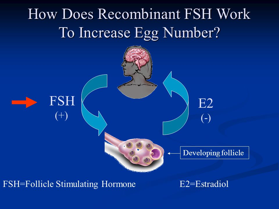 How Does Recombinant FSH Work To Increase Egg Number